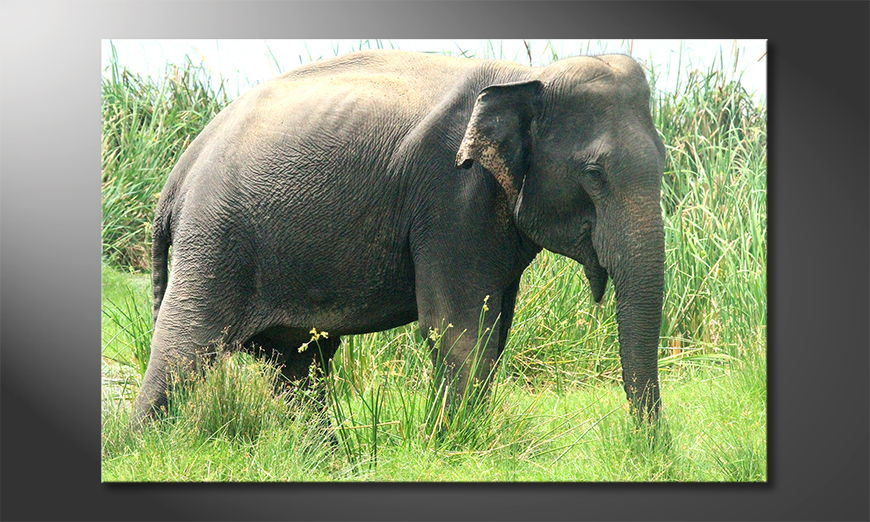 Art-print-Old-Elephant
