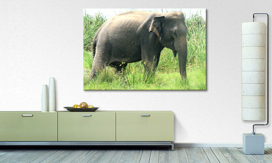 Art print Old Elephant