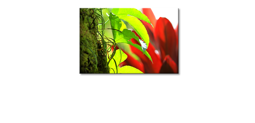 Art-print-Red-Green-Nature
