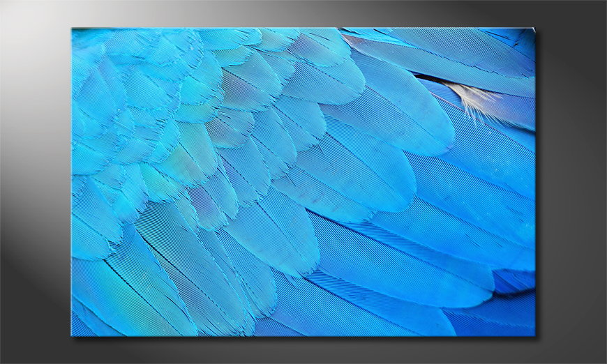 Canvas Bird Feathers