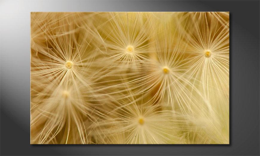 Canvas print Dandelion Closeup