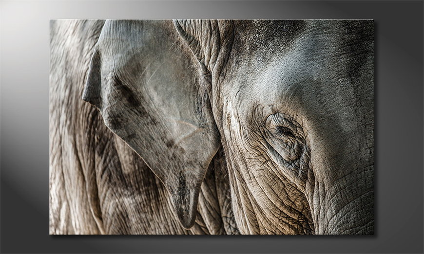 Canvas print Eye of Elephant