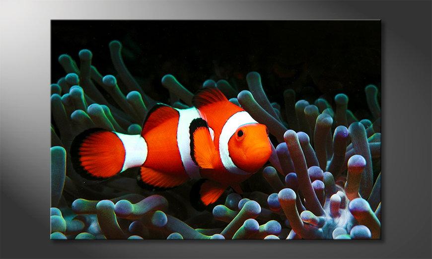 Modern Canvas print Nemo