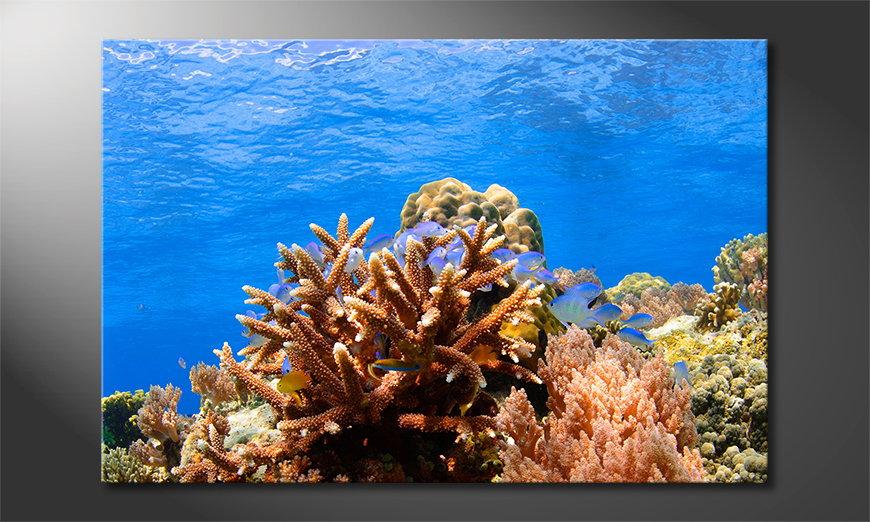 Modern  art print Corals Reef