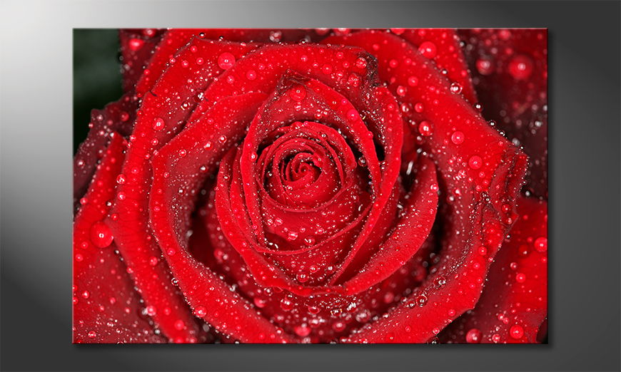 Modern-art-print-Morning-Rose