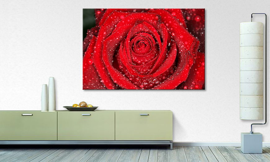Modern art print Morning Rose