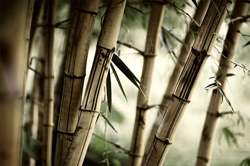 Photo-wallpaper Bamboo shaft from 120x80cm
