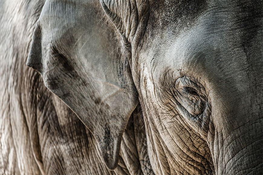 Photo-wallpaper Elephant skin from 120x80cm