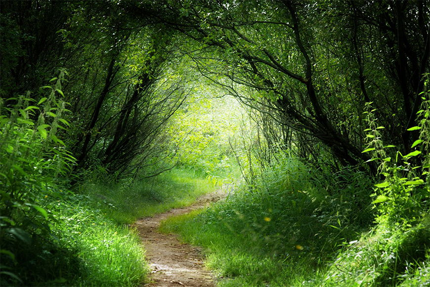 Photo-wallpaper Green way from 120x80cm