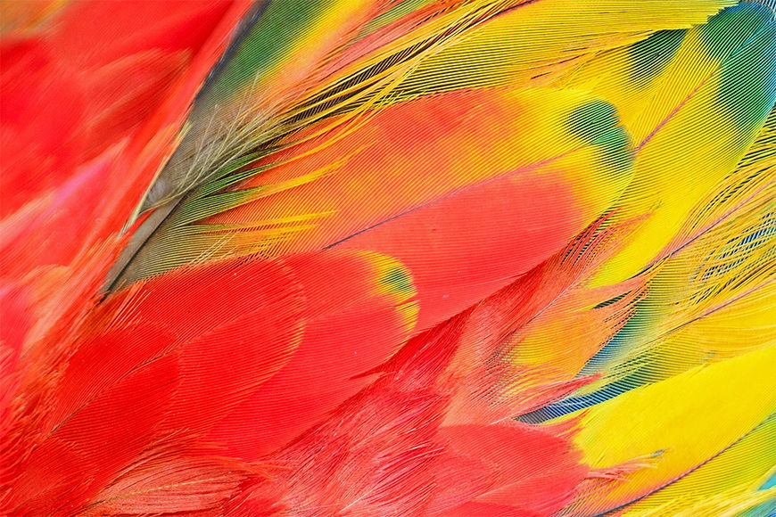 Photo wallpaper Parrot from 120x80cm