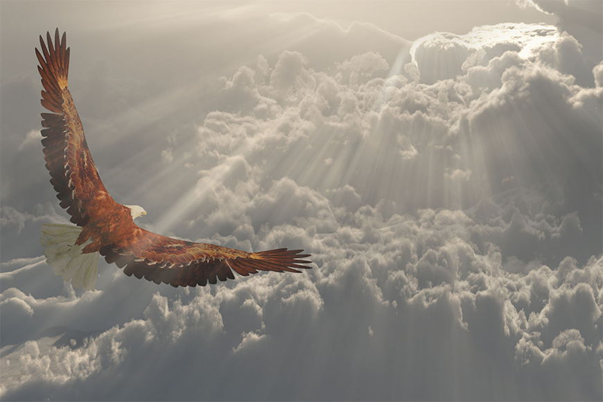 Photo-wallpaper Proud eagle from 120x80cm