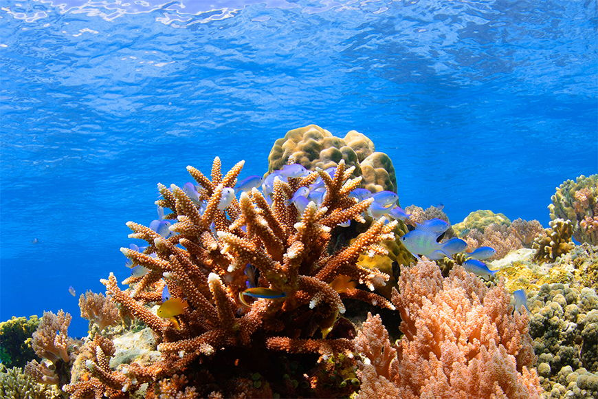 Photo-wallpaper coloured reef from 120x80cm