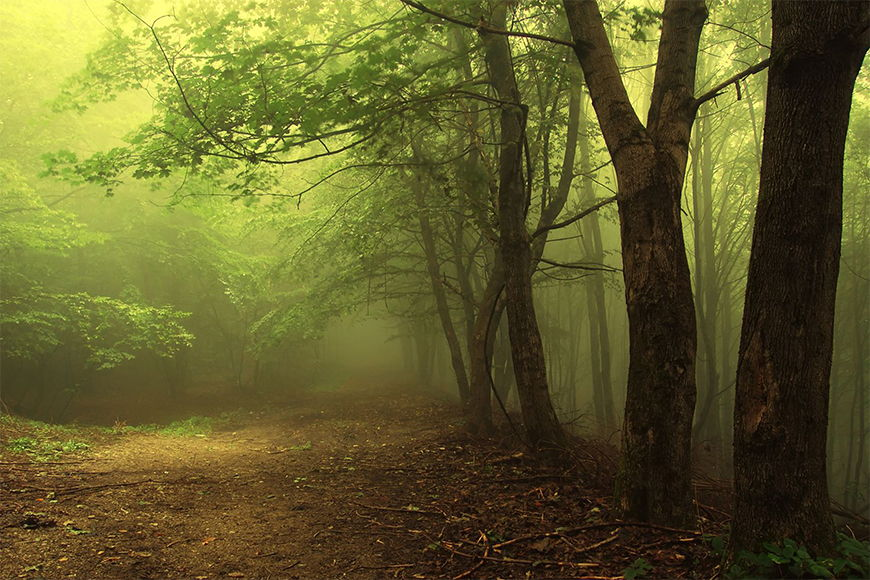 Photo-wallpaper fairy-tale forest from 120x80cm