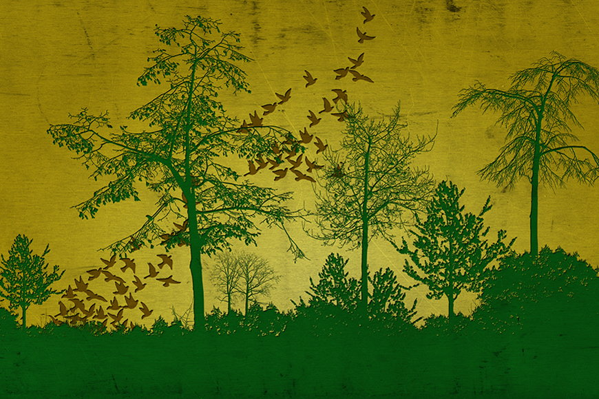 Wallpaper Cool woods from 120x80cm