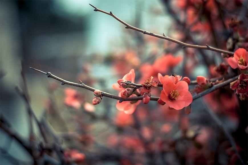 Wallpaper Fresh blossom from 120x80cm